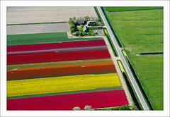Anna Paulowna (bruxelles5) Tags: holland flying tulips flight thenetherlands hollande cesna bulbflowers northholland annapaulowna tulipsfields cesna172