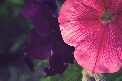 gratuitous flower closeup + textured bokeh shot