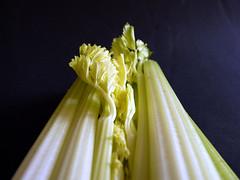 celery by Judy **