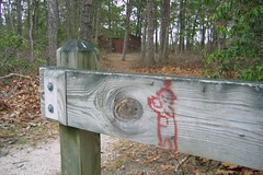 A Teletubbies Welcome To The Pine Barrens (kleepet) Tags: graffiti newjersey hiking nj pinelands graffito teletubbies pinebarrens pakimpond lebanonstateforest brendantbyrnestateforest pinelandsnationalreserve mountmiserytrail mtmiserytrail colorfulrainymtmiseryhike
