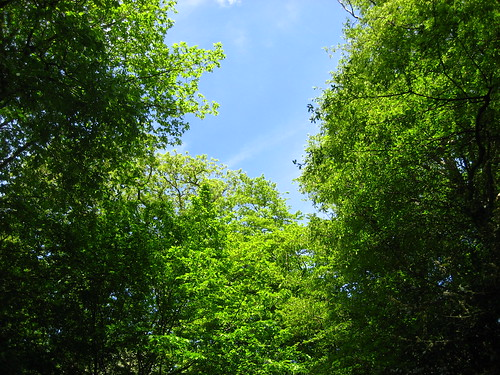 Green trees, blue skies
