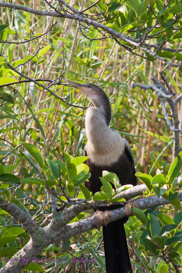 Everglades National Park (18 of 40)