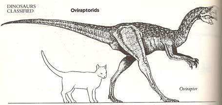 """The Dinosaur Data Book"" (1990) p. 118"