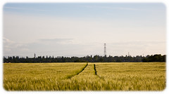 Makin' Tracks (Josh_Wolf) Tags: field skyline canon geotagged photo vanishingpoint wheat 400d thechallengefactory