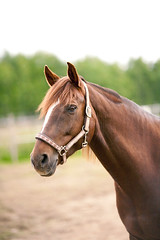 Lokal dressyr, Partille Ridklubb (Maria Karlsson) Tags: horse competition hst dressage tvling dressyr dressyrtvling partilleridklubb lokaldressyr