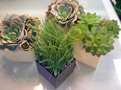 Succulent Plants and Wheat Grass