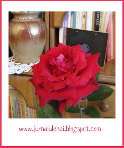 un trandafir tare drag