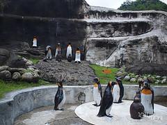 20110602酷節能體驗營 (52) (fifi_chiang) Tags: zoo taiwan olympus taipei ep1 木柵動物園 17mm 環保局 酷節能體驗營