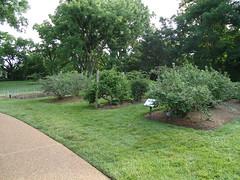 Kemper Fruit Garden