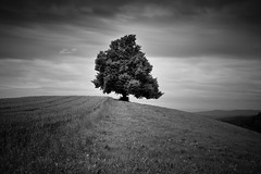 the tree (gato-gato-gato) Tags: leica bw white black tree blanco nature juni digital dark landscape 50mm schweiz switzerland suisse f14 sommer zurich negro natur rangefinder zrich svizzera landschaft weiss zuerich uetliberg manualfocus baum asph schwarz dunkel spaziergang wanderung m9 samstag zri naturephotography zurigo manualmode landscapephotography felsenegg zueri summiluxm outdoorphotography zrich manuellerfokus gatogatogato leicasummiluxm50mmf14asph leicam9 gatogatogatoch wwwgatogatogatoch