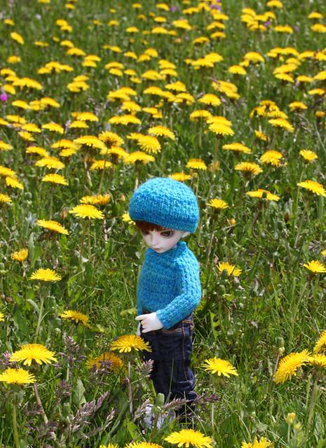 digory in dandelion meadow