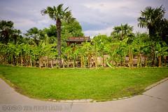 PLW_5585 (Laszlo Perger) Tags: wien vienna sterreich austria blumengarten hirschstetten flowergarden
