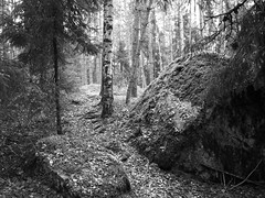 October Forest (Kirppu_81) Tags: blackandwhite mustavalko epl3 tampere lokakuu