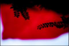 20160818-207 (sulamith.sallmann) Tags: natur pflanzen blatt blur bltter effect effects effekt filter folientechnik nature plants red rot unscharf zweig frankreich fra sulamithsallmann