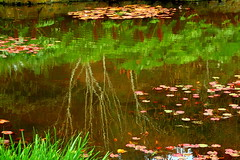 MONET WAS HERE.......... (elliott.lani) Tags: water reflection reflections waterlily lilies ripples nature naturephotography gardens lilypond pond colour color colourful beautiful peaceful monet tasmanianbotanicalgardens botanicalgardens green wow