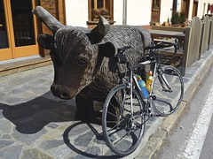 Moo (will_cyclist) Tags: alps cycling switzerland cows cowsx