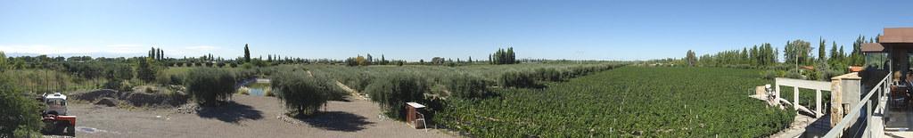 Tempus Alba Winery