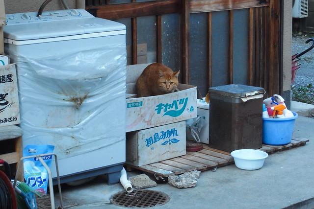Today's Cat@2011-03-23