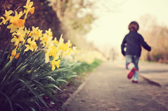 Daffodil road {Explored} (Paisley patches (coming and going)) Tags: boy 35mm nikon raw village path harry nikkor daffodils personalgeography familyuk