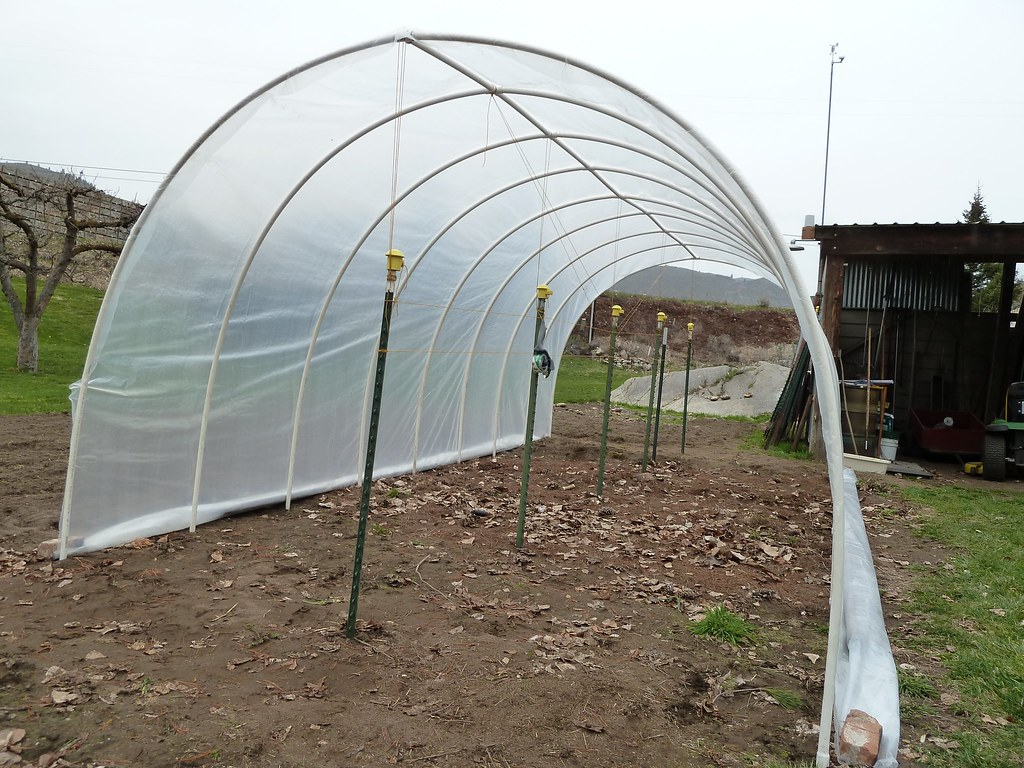 Hoop house - high tunnel made out of 3/4 pvc pipe.