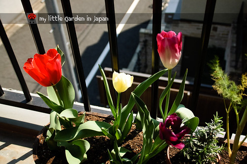 my-new-little-garden-in-japan4