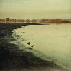 not knowing (jssteak) Tags: morning winter lake canon vintage reflections square landscape texas calm powerlines shore aged textured lakepalestine texturesquared t1i