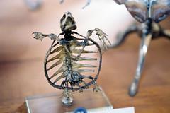 Galerie de Paléontologie (kygp) Tags: paris france colour analog skeleton photography turtle jardin des musee bones avril tortue plantes squelette 2011 paleontologie