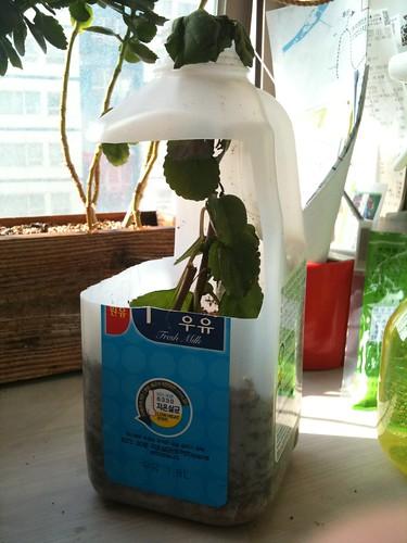 재활용 페트병으로 만든 화분(2)
