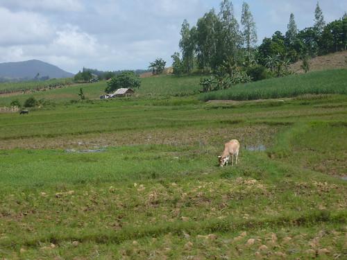 Panay-Roxas-Estancia-Iloilo (33)