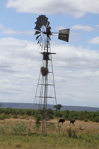 Ostrich and wind mill