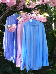 shirts drying London spring 2011 09-04-2011 13-03-43 (mansionmedia simon knight) Tags: blue paris london edinburgh shirts drying simonknight mansionmedia hilditchkey simonaknight doublecuff hilditchandkey