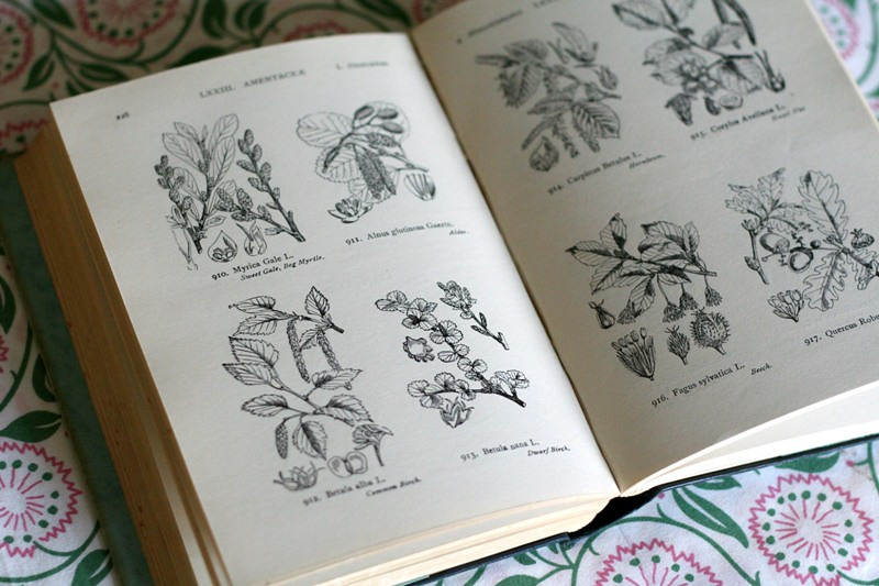 british flora illustrations
