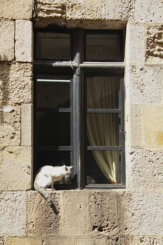 Cat in Rhodes Old Town