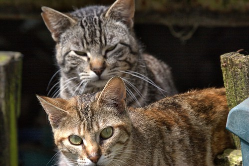 Just Feral Cats