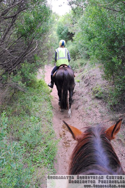 Gunnamatta Equestrian Centre, Mornington Peninsular-26