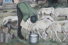 Mungitura..scene di vita quotidiana (Ivana Barrili) Tags: sardegna sardinia latte murales sardinien formaggio pecore pastore ogliastra pecora sardigna pastorizia barisardo mungitura messagewall