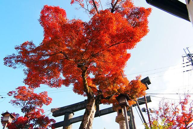 20101120_142311_吉野山_金峯山寺_銅鳥居