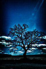 I Remember (Sean Kanada) Tags: blue tree art beautiful minnesota surreal atmosphere roadtrip spotlight chillin nighttime moonlight dope chill hdr bluetree lonetree bluelight earthday blueskys coldsky lovelife cooltree 2011 beautifulblue noend worldtree hdrnight naturehdr treehdr minnesotanature besthdr minnesotahdr treeoftheworld springhdr spring2011 bestof2011 hdr2011 minnesota2011 2011hdr seankanada atmosphereminnesota