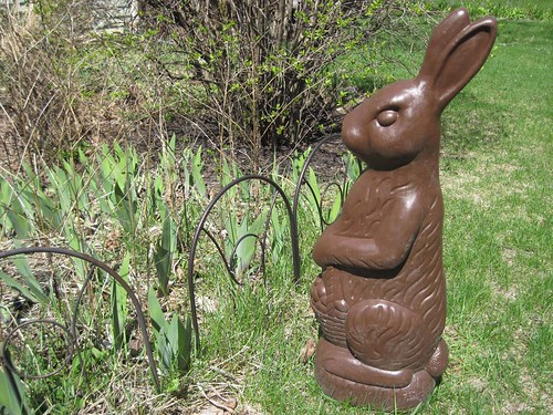 Chocolate Yard Bunny