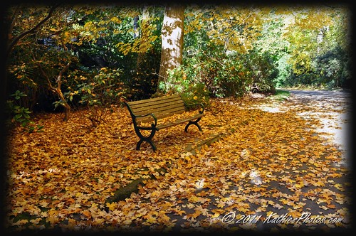 Autumn at Alfred Nicholas Gardens