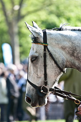 Concentration (D3nsha) Tags: paris cheval hippodrome auteuil