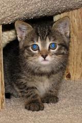 IMG_0642 (Kurt Faler) Tags: rescue cats cat kitten earth kitty kittens center angels felines clinic neuter spay ffrc friendsoffelinesrescuecenter earthangelsspayneuterclinic easnc