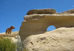 Arch too (ehreng) Tags: dog newmexico grass sandstone arch desert aztec hike top20nm