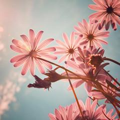 Flowers of love (JAG_50D) Tags: barcelona flowers autumn light summer sky españa naturaleza flores love sol nature colors azul clouds spain europa europe bcn natura catalonia cielo verano catalunya gettyimagesiberiaq2