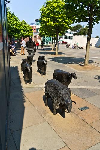 Sheep On The Road - Belfast Public Art