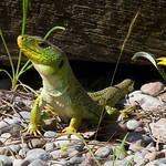 Natura - Reptiles y batracios