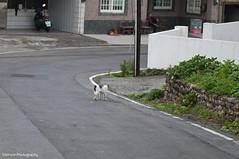 (Sherwin_andante) Tags: cat pentax  k7 2011 tamron90 201105