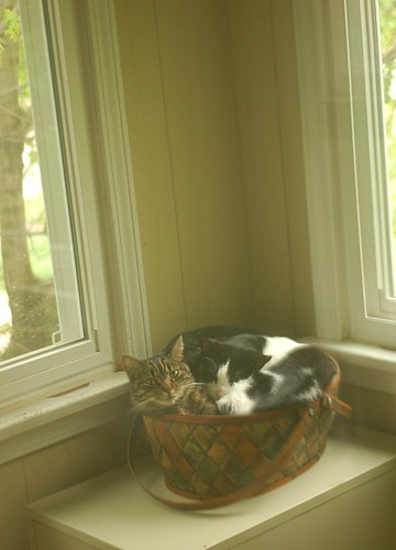 thee cat basket