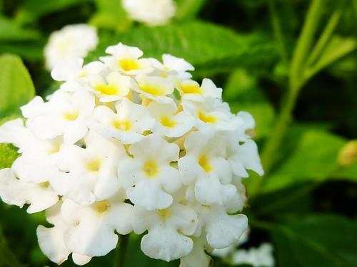 天母路邊的小花