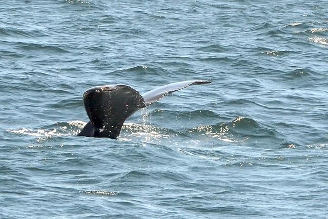 whalewatch 7